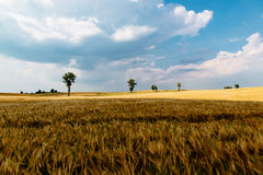 Brown Grass Under Blue Sky Royalty Free Stock Photo