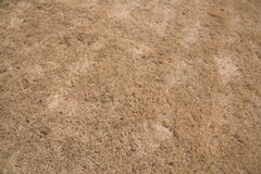 Brown Grassy Background Royalty Free Stock Photography