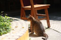 Brown and Gray Cat Near Wooden Chair on Daytime Stock Photo