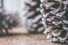 Brown and Gray Decorative Pine Cone Royalty Free Stock Photos