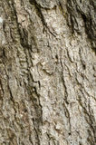 Brown gray tree bark Royalty Free Stock Photo