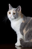 Brown gray white cat looking up Stock Photos