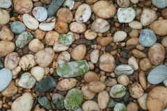 Brown, Gray, White, Green Pebble Stones for Background. And Texture Royalty Free Stock Image