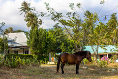 Brown grazing horse on the grass Royalty Free Stock Photo
