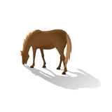 Brown grazing horse isolated image in a flat style. Vector. Stock Photo