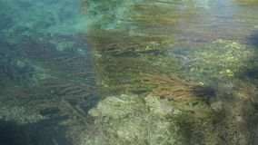 Brown and green algae in the crystal clear water. 4k stock footage