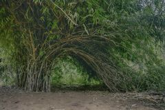 Brown and Green Bamboo Trees stock photography