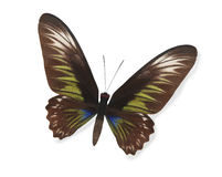 Brown and green butterfly isolated Stock Images