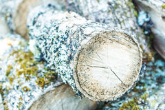 Brown and Green Cut Log With Algae Royalty Free Stock Photos