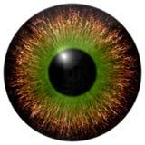 Brown green eye iris Royalty Free Stock Photo