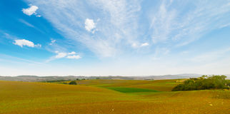 Brown and green field under a blue sky. In Tuscany, Italy Stock Image