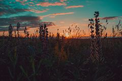 Brown and Green Grass during Sunset Royalty Free Stock Photos