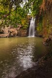 Brown and green waterfall spring from overhanging tree shade. royalty free stock image