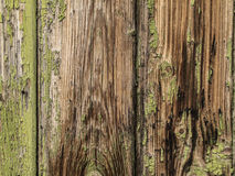 Brown and green wooden background Stock Photography