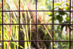 Brown grid fence Stock Photography