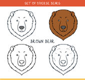 Brown grizzly bear. Set  face, heads bear in lines Royalty Free Stock Images