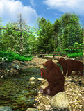 Brown grizzly bears Stock Image