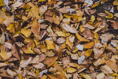 Brown Ground Covered With Withered Leaves Stock Photo