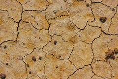 Brown ground soil texture Royalty Free Stock Photo
