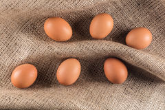 Brown-Hühnereien Lizenzfreies Stockbild