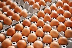 Brown-Hühnereien Lizenzfreie Stockfotos
