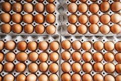 Brown-Hühnereien Stockfoto
