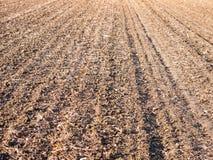 Brown ha arato spazio vuoto AG di autunno dell'azienda agricola del campo delle piste asciutte dello spazio Immagine Stock Libera da Diritti