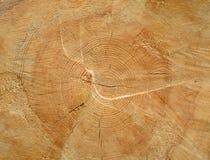 Brown ha segato lo sfondo naturale dell'estremità di legno del ceppo Immagine Stock