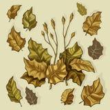 Brown ha stilizzato le foglie Fotografie Stock Libere da Diritti