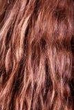 Brown hair Stock Image