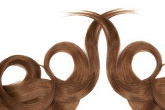 Brown hair isolated on white background. Long beautiful ponytail in shape of circle. Natural healthy hair isolated on white background. Detailed clipart for your stock photo