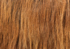 Brown hair texture Royalty Free Stock Photography