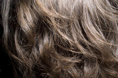 Brown-haired back. Of the head Stock Photos
