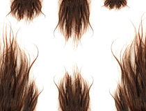 Brown hairs Royalty Free Stock Photo