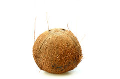 Brown hairy of coconut (Cocos nucifera) vertical isolated on white background. A brown hairy of coconut (Cocos nucifera) vertical isolated on white background Royalty Free Stock Image
