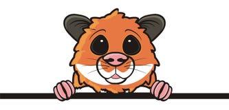 Brown hamster peeping Royalty Free Stock Photos