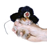 Brown hamster in Russian national traditional fur hat with ear Royalty Free Stock Image