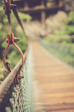 Brown Hanging Bridge Surrounded by Green Trees Royalty Free Stock Photo