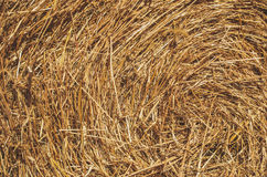 Brown Hay Stock Images