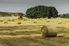 Brown Hay Rolls Royalty Free Stock Photography