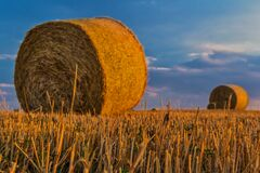 Brown Hay Stack Stock Photos