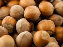 Brown hazelnuts Stock Photography