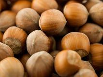 Brown hazelnuts stock photography