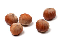 Brown hazelnuts on white background Royalty Free Stock Images