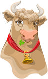 Brown head with bell cow chewing clover Stock Photography