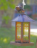 A Brown Headed Cowbird perches on a bird feeder. Royalty Free Stock Image