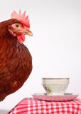Brown hen and cup of coffee. Studio shot of the brown hen Royalty Free Stock Images