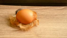 A brown hen eggs and chicken feather on wooden table, closeup photo royalty free stock photo
