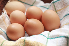Brown hen eggs Royalty Free Stock Image