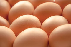 Brown hens Eggs close up Royalty Free Stock Image